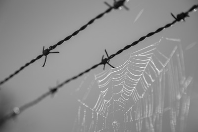 Barbed Wire Spider Web