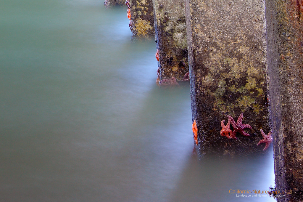"""Starfish under the Pier""<br /> Location: Crissy Field, San Francisco, California."