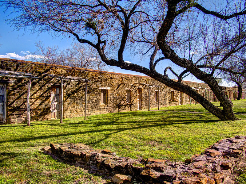 Tree with Character #1, Mission San Jose - San Antonio, Texas