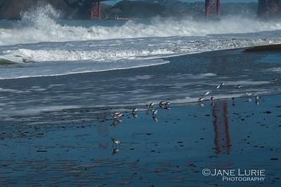 Plovers and Bridge Reflection, Baker Beach