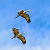Flying_Mates-CranesNE_2014Mar20_6624