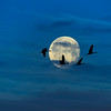 Cranes Over The Full Moon