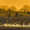 Backlit Dawn Takeoff-CraneNE_2014Mar20_4121