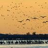 Pre-Dawn_Flyers-CraneNE_2014Mar21_7941