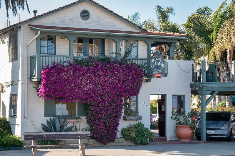 The Ala Mar Motel in Santa Barbara, almost engulfed by bougainvillea