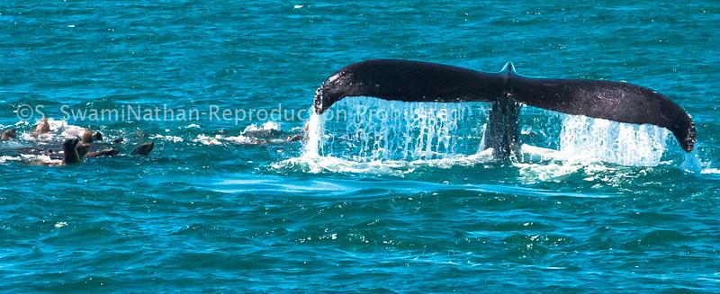 Sea Lions and Humpback
