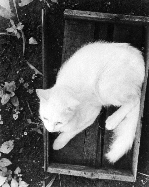 White fur, black dirt