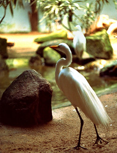 White and smooth, the bird