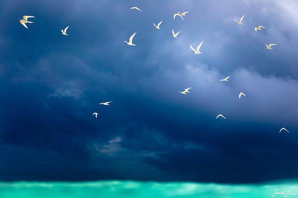 Stormy Birds (MALDIVES)