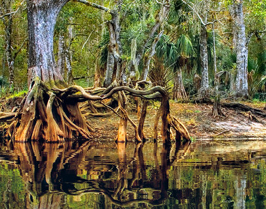Fisheating Creek