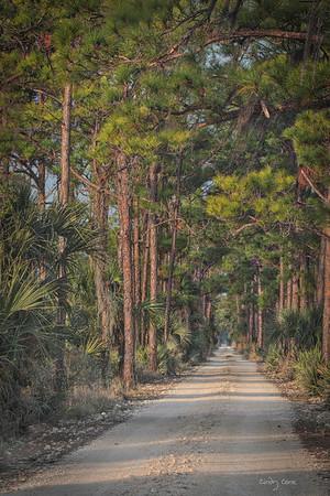 Pinelands Travels