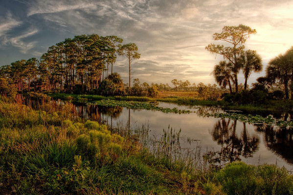 Morning in Old Florida