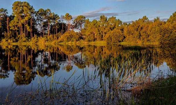 Sunlight on the pond