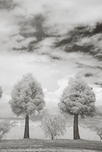 Ready Infared 2 trees