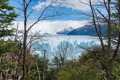 Perito Moreno Glacier via a subpolar forest