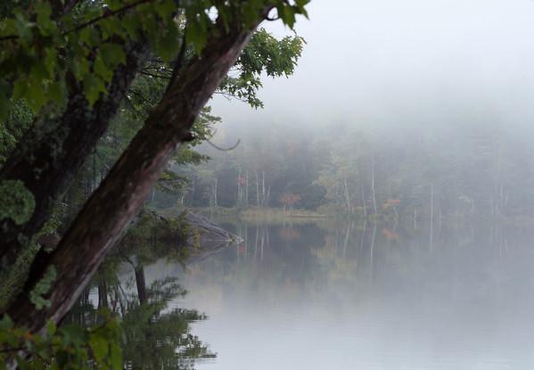 Saltmarsh Pond - Foggy Morning