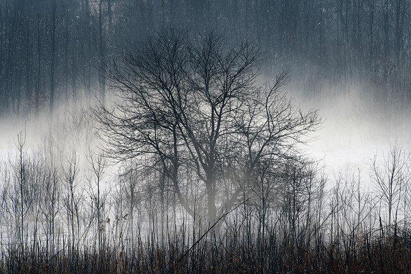 Tree in the Fog<br /> Lochmere, NH