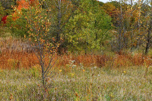 Lakewood Forest Preserve