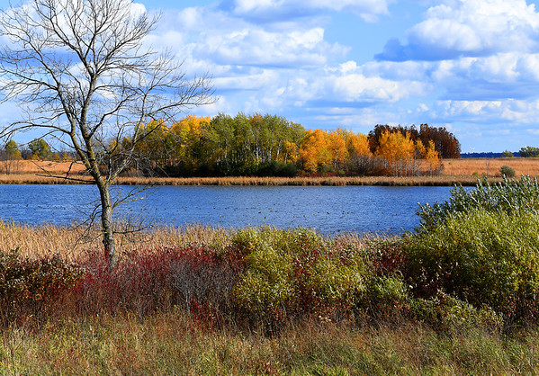 Fall at Horicon Marsh