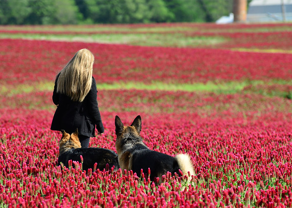 Walking Through the Crimson Clover