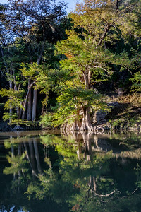 cypress reflections