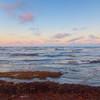 sargassum sunset