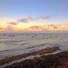 sargassum sunset1