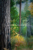 Forest in Yosemitte