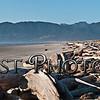 Manzanita Beach driftwood Pano4432-34