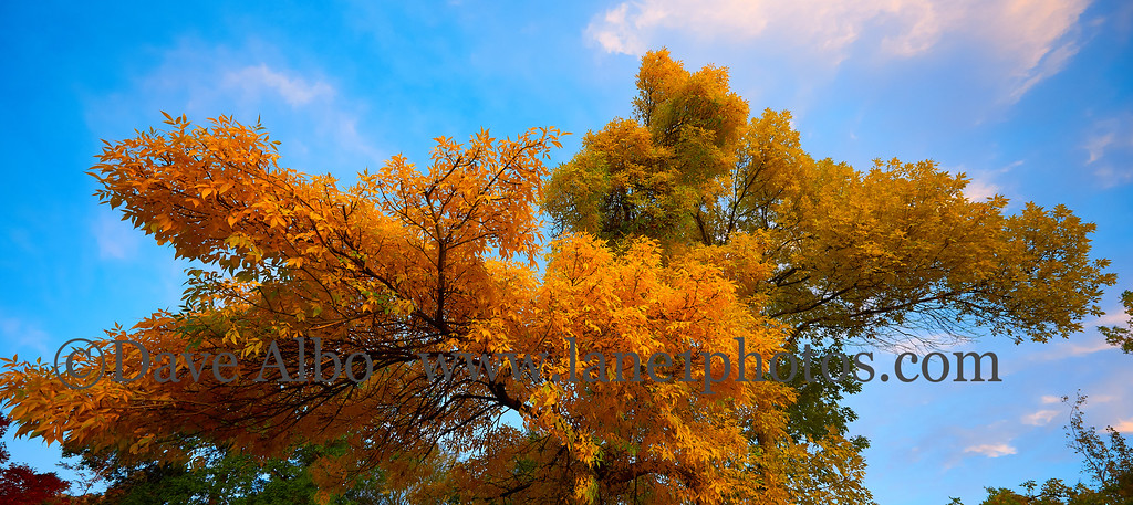 4th street shuffle fall colors