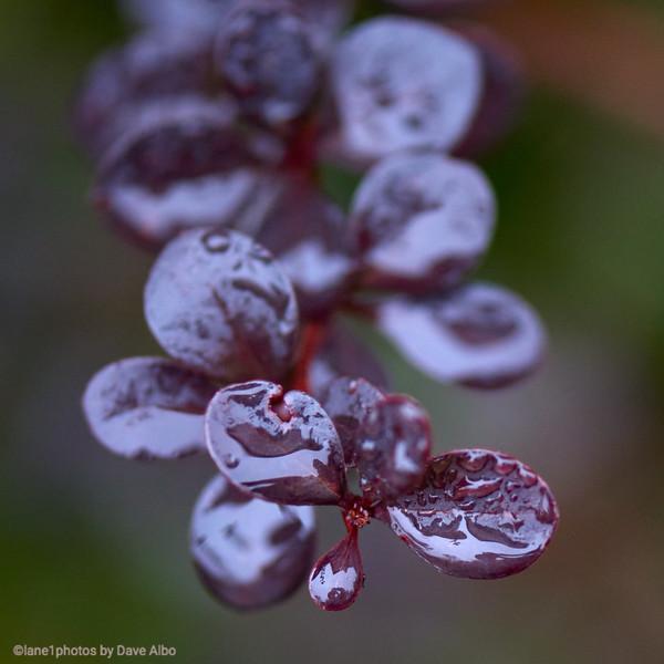 Nature close up