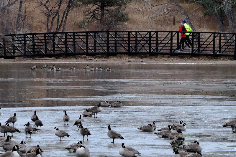 Bridging the geese