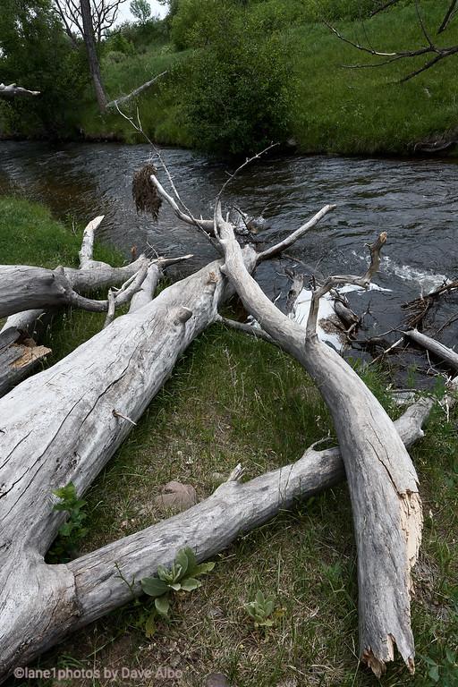 Logs, South Boulder Trail