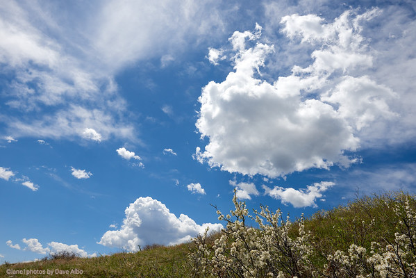 Fruit Tree with Sky and Clouds