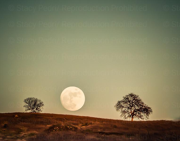 Cronan Moonrise