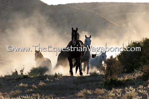 Horse Portfolio - The Whole Shebang!