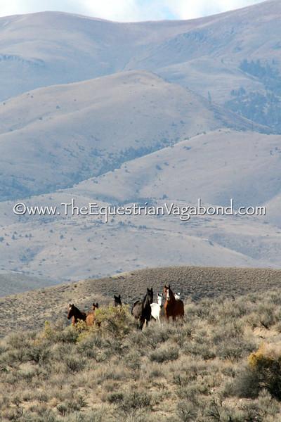 Owyhee Herd I