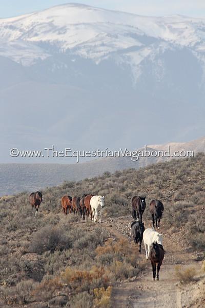 Herd Trek V