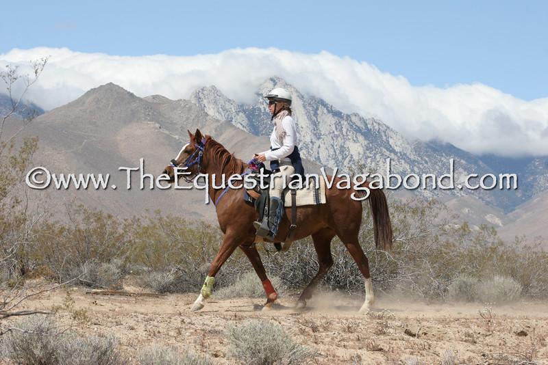 DHRE-5345A Endurance Ride