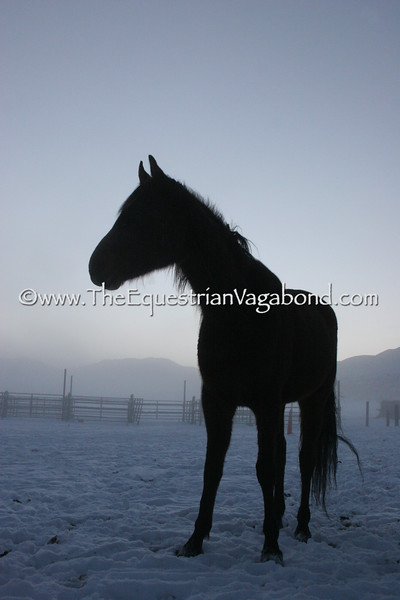 Fog Princess II