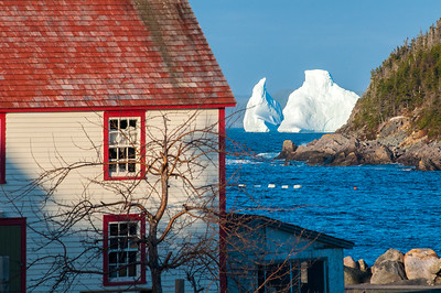 Icebergs kings cove 7 5x11  051414_0029
