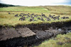 Peat Cutting, Isle of Sky, Scotland.  Peat has been hand cut from bog, and stacked to dry.