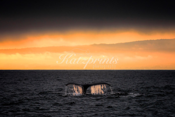 Whale fluke at sunset