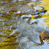 Liquid Aspen (Liquid Light Series)