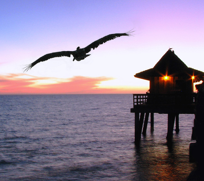 Twilight Pelican