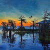 Blue Cypress Sunset