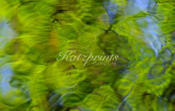 Fresh green leaves and blue sky create a glass-like reflection in a creek