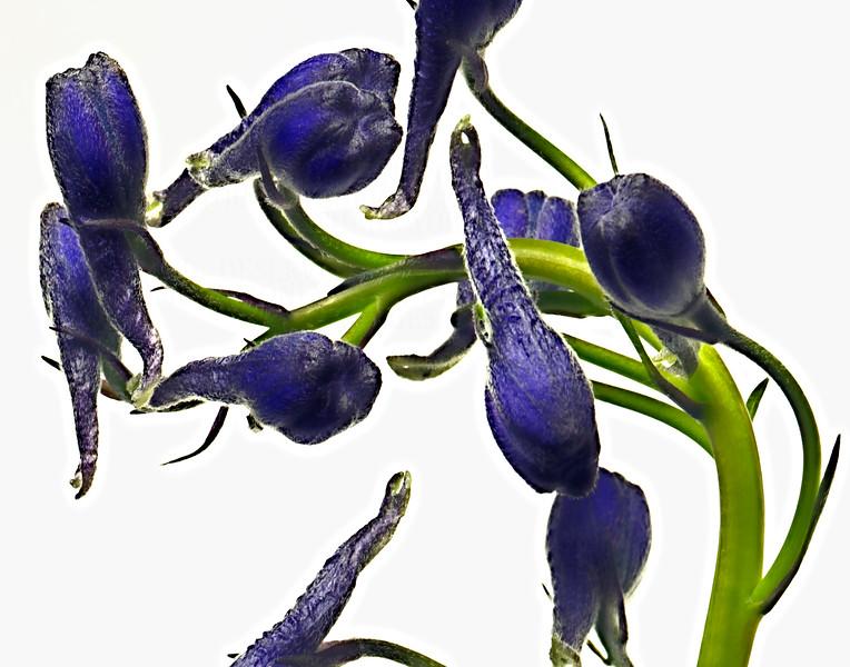 daffodilbabies_0205