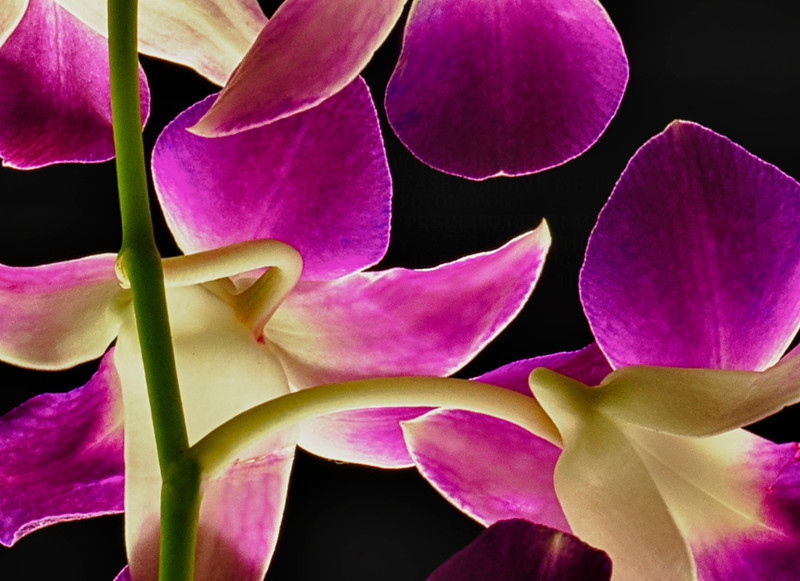 OrchidHDR_0194