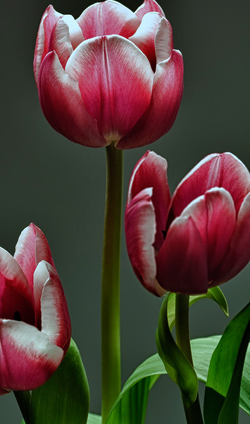 Lily 3Pink_0128